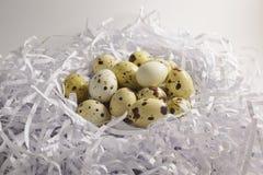 Ovos de codorniz no ninho de papel isolado no fundo branco Imagem de Stock