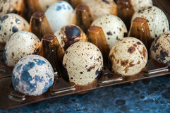 Ovos de codorniz no recipiente Imagens de Stock Royalty Free