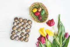 Ovos de codorniz pintados para a Páscoa com as tulipas coloridas no fundo branco fotografia de stock royalty free