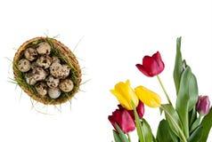 Ovos de codorniz pintados para a Páscoa em uma cesta redonda com um ninho de tulipas coloridas no fundo branco Foto de Stock