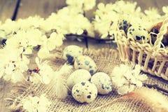 Ovos de codorniz, ramo da flor do abricó e pena Fotografia de Stock