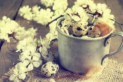 Ovos de codorniz, ramo da flor do abricó e pena fotos de stock royalty free