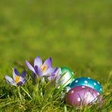Ovos de Easter com açafrões Imagens de Stock