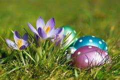 Ovos de Easter com açafrões Imagem de Stock