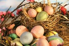 Ovos de Easter e flores da maçã fotografia de stock royalty free