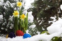 Ovos da páscoa e narciso na neve fotografia de stock