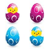 Ovos de easter e pintainhos coloridos do choque Imagens de Stock Royalty Free