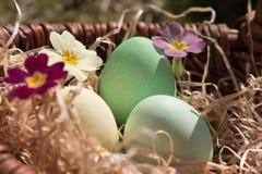 Ovos de Easter em uma cesta Imagem de Stock