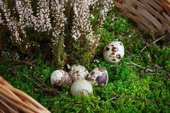 Ovos de Easter em uma cesta Foto de Stock Royalty Free