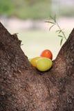 Ovos de easter escondidos Foto de Stock Royalty Free