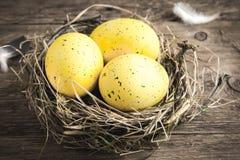 Ovos de Easter no ninho Foto de Stock