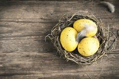 Ovos de Easter no ninho Imagens de Stock