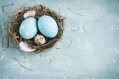 Ovos de Easter no ninho Fotos de Stock Royalty Free