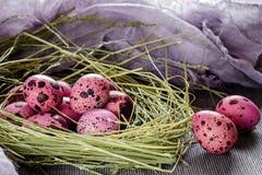 Ovos de Easter no ninho Foto de Stock Royalty Free