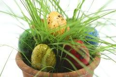 Ovos de Easter que escondem na grama fotos de stock royalty free