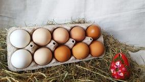 Ovos de embalagem com o um ovo vermelho Ovos para a Páscoa Ovos pintados Ovo vermelho contra os ovos brancos fotos de stock royalty free