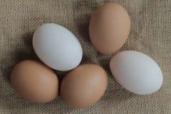 Ovos de galinhas frescos e ovos do pato Fotos de Stock