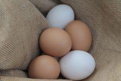 Ovos de galinhas frescos e ovos do pato Fotografia de Stock Royalty Free