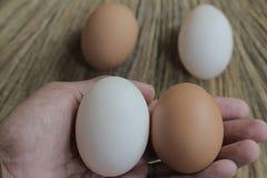 Ovos de galinhas frescos e ovos do pato Imagem de Stock