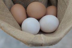 Ovos de galinhas frescos e ovos do pato Foto de Stock