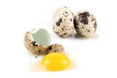 Ovos de Quai imagem de stock royalty free