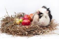 Ovos decorativos do chocolate e da galinha da Páscoa no ninho com gu Fotos de Stock Royalty Free