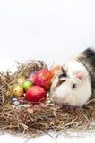 Ovos decorativos do chocolate e da galinha da Páscoa no ninho com gu Fotografia de Stock