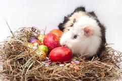 Ovos decorativos do chocolate e da galinha da Páscoa no ninho com gu Imagem de Stock