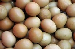 Ovos do faisão Fotografia de Stock