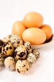 Ovos do ovo e de codorniz da galinha Fotografia de Stock Royalty Free