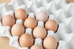 Ovos do painel Imagens de Stock