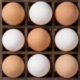 Ovos dos ovos da diversidade, os brancos e os marrons Fotos de Stock