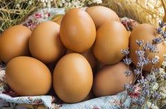 Ovos dourados Imagem de Stock Royalty Free