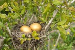 Ovos dourados Fotografia de Stock