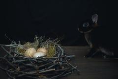 Ovos dourados do p?ssaro em um ninho ao lado de um coelho preto em um fundo escuro imagens de stock royalty free