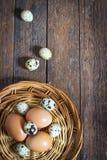 Ovos e codorniz da galinha Imagem de Stock