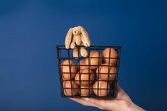 Ovos e coelho em uma cesta Fotos de Stock