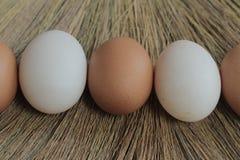 Ovos e ovos do pato Fotos de Stock