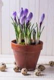 Ovos e flores de Easter Foto de Stock