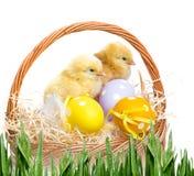Ovos e galinhas de Easter Imagem de Stock