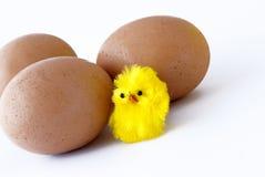 Ovos e pintainho imagens de stock royalty free