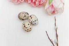 Ovos e tulips de Easter Imagem de Stock Royalty Free
