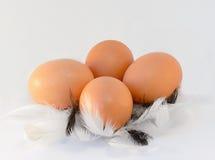 Ovos em penas Imagens de Stock