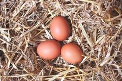 Ovos em um ninho da palha Fotos de Stock