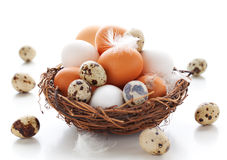 Ovos em um ninho em um fundo branco imagens de stock royalty free