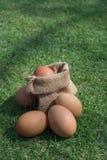 Ovos em um saco pequeno de serapilheira Foto de Stock Royalty Free