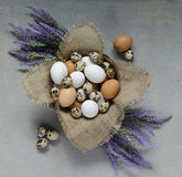 Ovos em uma bacia de madeira e em umas flores violetas na tabela Fotos de Stock Royalty Free