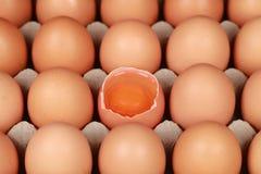 Ovos em uma caixa fotografia de stock royalty free