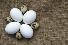 ovos Flor-dados forma da galinha e ovos de codorniz Suporte branco dos ovos da galinha e de ovos das codorniz de lado a lado em u Fotografia de Stock