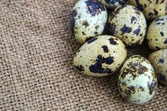 ovos Flor-dados forma da galinha e ovos de codorniz Suporte branco dos ovos da galinha e de ovos das codorniz de lado a lado em u Fotos de Stock Royalty Free